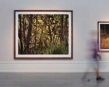 C-print silicone mount. 180x225cm. Artist frame in oak.